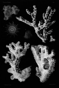 03reef-drawing-negative